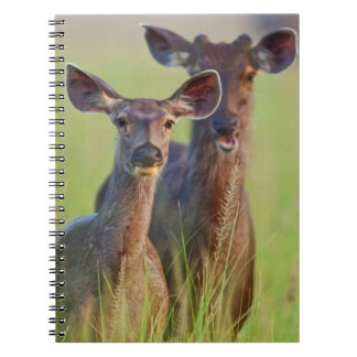 Sambar Deers in the meadows, Corbett National Park Notebooks