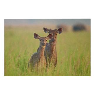 Sambar Deers in the meadows, Corbett National Park Wood Wall Decor