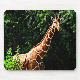 Samburu Giraffe Mouse Mat