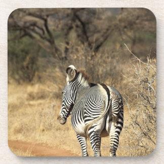 Samburu National Reserve, Kenya Coaster