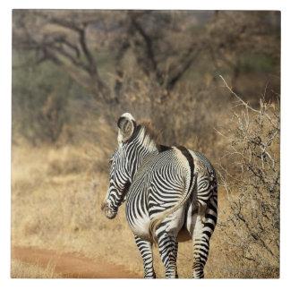 Samburu National Reserve, Kenya Large Square Tile