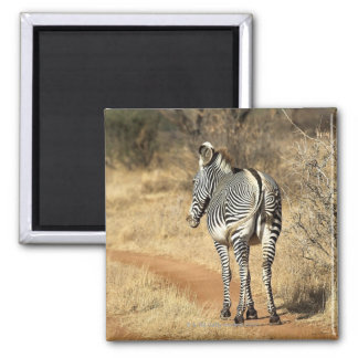 Samburu National Reserve, Kenya Square Magnet