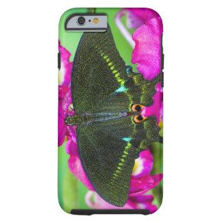 Sammamish, borboleta tropical de Washington Tough iPhone 6 Case