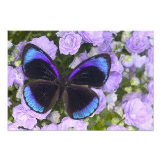 Sammamish Washington Photograph of Butterfly