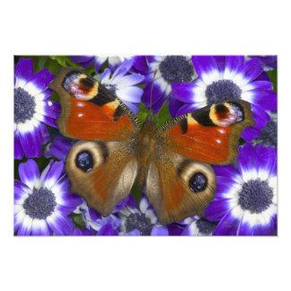 Sammamish Washington Photograph of Butterfly 10