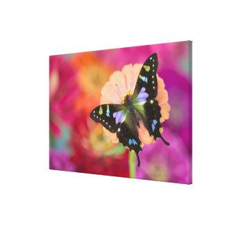 Sammamish Washington Photograph of Butterfly 10 Canvas Print