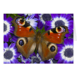 Sammamish Washington Photograph of Butterfly 10 Card