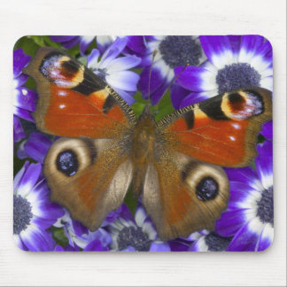 Sammamish Washington Photograph of Butterfly 10 Mouse Mat
