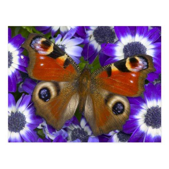 Sammamish Washington Photograph of Butterfly 10 Postcard