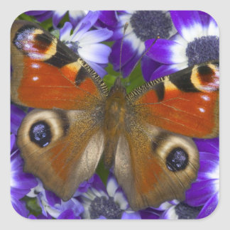 Sammamish Washington Photograph of Butterfly 10 Square Sticker