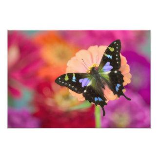 Sammamish Washington Photograph of Butterfly 11