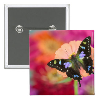 Sammamish Washington Photograph of Butterfly 11 15 Cm Square Badge