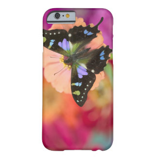 Sammamish Washington Photograph of Butterfly 11 Barely There iPhone 6 Case