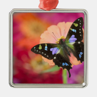 Sammamish Washington Photograph of Butterfly 11 Christmas Ornament