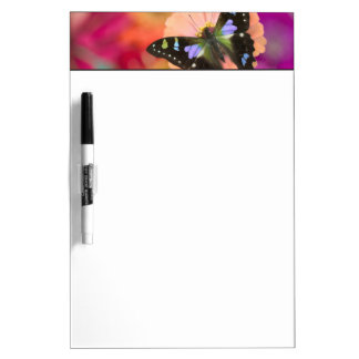 Sammamish Washington Photograph of Butterfly 11 Dry Erase Board