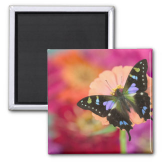 Sammamish Washington Photograph of Butterfly 11 Magnet