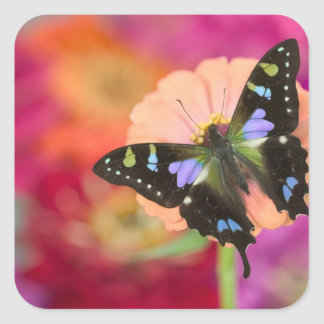 Sammamish Washington Photograph of Butterfly 11 Square Stickers