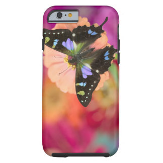 Sammamish Washington Photograph of Butterfly 11 Tough iPhone 6 Case