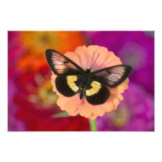 Sammamish Washington Photograph of Butterfly 12