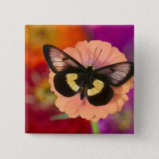 Sammamish Washington Photograph of Butterfly 12 15 Cm Square Badge