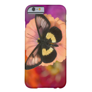 Sammamish Washington Photograph of Butterfly 12 Barely There iPhone 6 Case