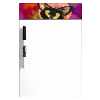 Sammamish Washington Photograph of Butterfly 12 Dry Erase Board