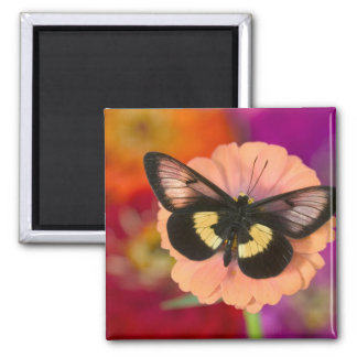 Sammamish Washington Photograph of Butterfly 12 Magnet