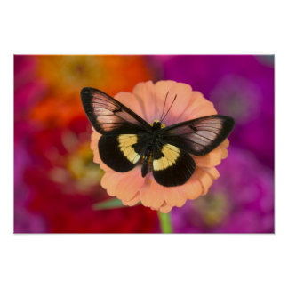 Sammamish Washington Photograph of Butterfly 12 Poster