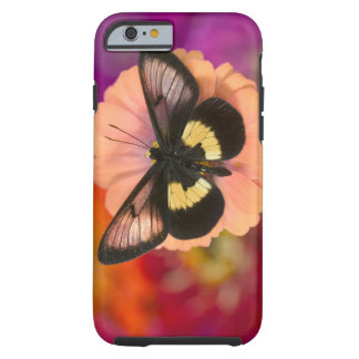 Sammamish Washington Photograph of Butterfly 12 Tough iPhone 6 Case
