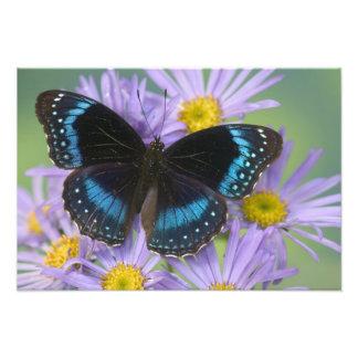 Sammamish Washington Photograph of Butterfly 13