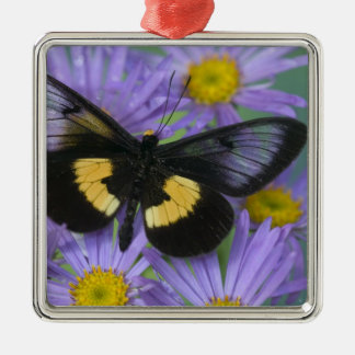 Sammamish Washington Photograph of Butterfly 13 Christmas Ornament
