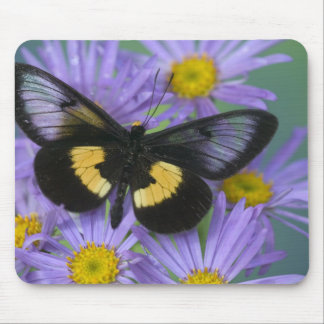 Sammamish Washington Photograph of Butterfly 13 Mouse Mat