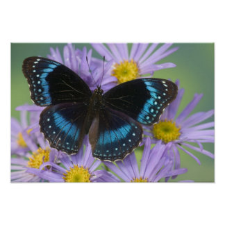 Sammamish Washington Photograph of Butterfly 13 Poster