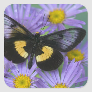 Sammamish Washington Photograph of Butterfly 13 Square Sticker
