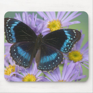 Sammamish Washington Photograph of Butterfly 14 Mouse Mat