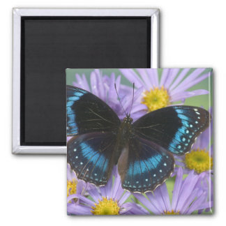 Sammamish Washington Photograph of Butterfly 14 Square Magnet