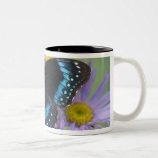 Sammamish Washington Photograph of Butterfly 14 Two-Tone Coffee Mug