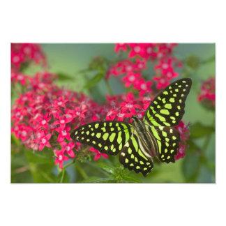 Sammamish Washington Photograph of Butterfly 15