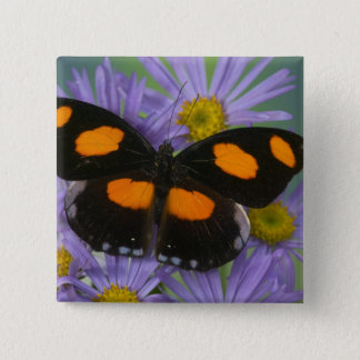 Sammamish Washington Photograph of Butterfly 15 15 Cm Square Badge