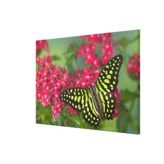 Sammamish Washington Photograph of Butterfly 15 Canvas Print
