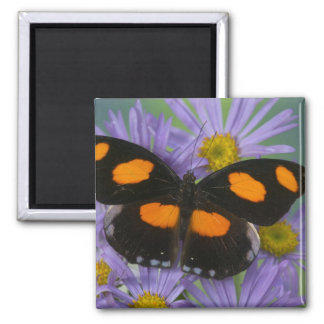 Sammamish Washington Photograph of Butterfly 15 Magnet