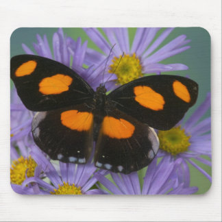 Sammamish Washington Photograph of Butterfly 15 Mouse Mat