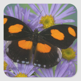 Sammamish Washington Photograph of Butterfly 15 Square Sticker