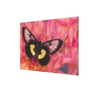 Sammamish Washington Photograph of Butterfly 16 Canvas Print