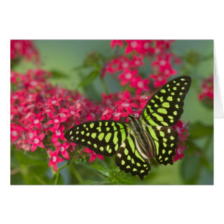 Sammamish Washington Photograph of Butterfly 16 Card