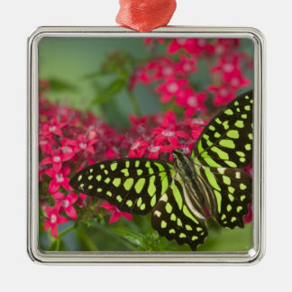 Sammamish Washington Photograph of Butterfly 16 Christmas Ornament