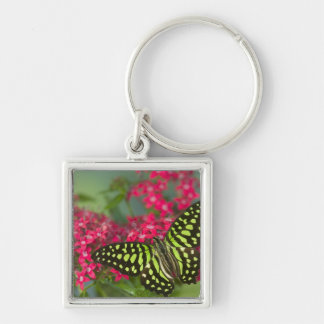 Sammamish Washington Photograph of Butterfly 16 Key Ring