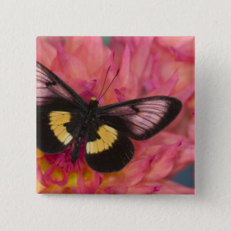 Sammamish Washington Photograph of Butterfly 17 15 Cm Square Badge