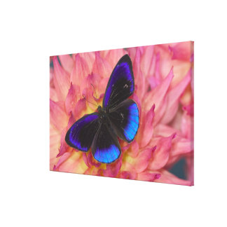 Sammamish Washington Photograph of Butterfly 17 Canvas Print