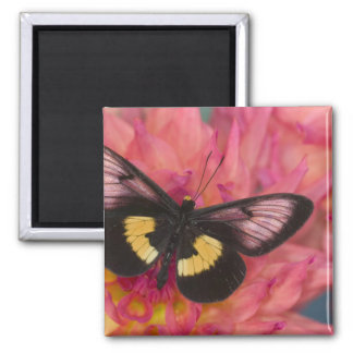 Sammamish Washington Photograph of Butterfly 17 Square Magnet